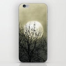 Winter Into Spring iPhone & iPod Skin