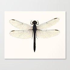 dragonfly #5 Canvas Print