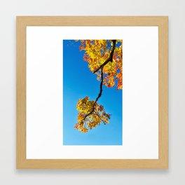 Fall in Maine Framed Art Print