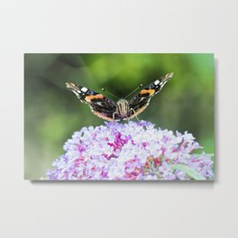 Butterfly IV Metal Print