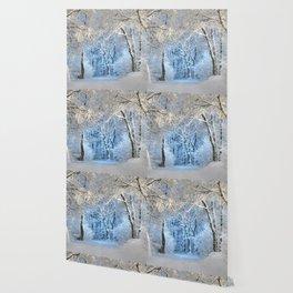Another winter wonderland Wallpaper