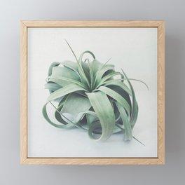 Air Plant III Framed Mini Art Print