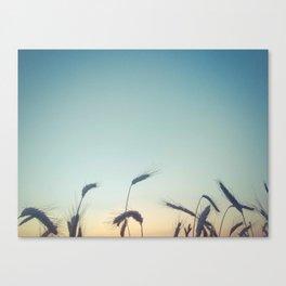 Summer of Straw Canvas Print