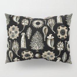 Ernst Haeckel - Scientific Illustration - Calcispongiae Pillow Sham