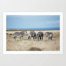 Four Zebras Art Print