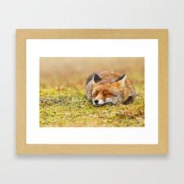 Comfortably Fox (red fox sleeping) Framed Art Print