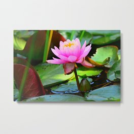 Water Lily Flower Aquatic Plant Metal Print