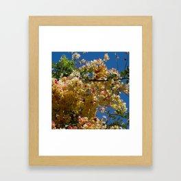 Wilhelmina Tenney Rainbow Shower Tree Framed Art Print