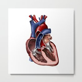 Cross section of human heart. Metal Print