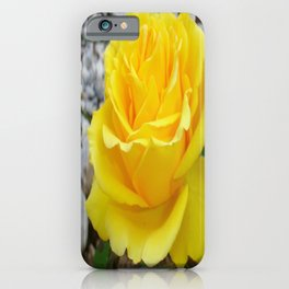 Beautiful Yellow Rose with Natural Garden Background iPhone Case