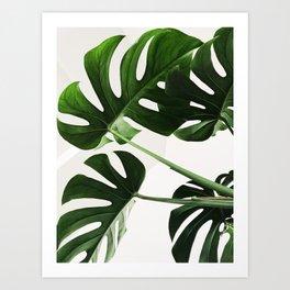 Monsterra Green Plant Leaves Photography Art Print