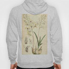 Dendrobium canaliculatum var. canaliculatum (as Dendrobium tattonianum) Curtis' 91 (Ser. 3 no. 21) Hoody