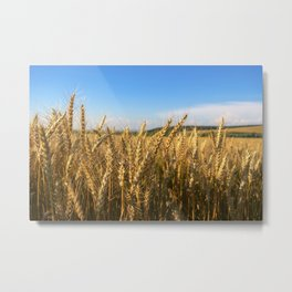 Wheat Field Metal Print