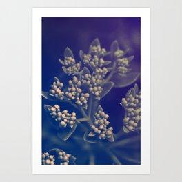 Floral Buds Art Print