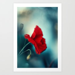 morning poppy Art Print
