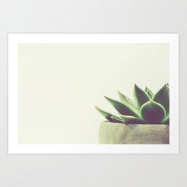 Palm Springs, California, pink, cactus, desert, desert photography, photography, desert décor, deser Art Print
