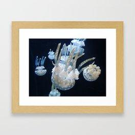 Jelly 1 Framed Art Print