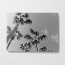 Palm Tress, Fuerteventura. Metal Print