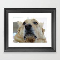 Indian Dog Framed Art Print