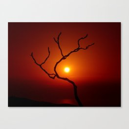 Evening Branch II Canvas Print
