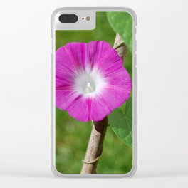 Morning glory flower Clear iPhone Case