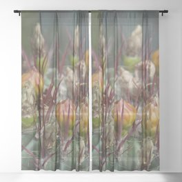 Prickly beauty Sheer Curtain