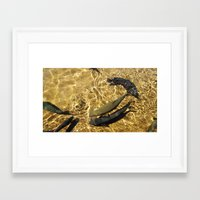 trout Framed Art Prints featuring Trout by Impromptu;