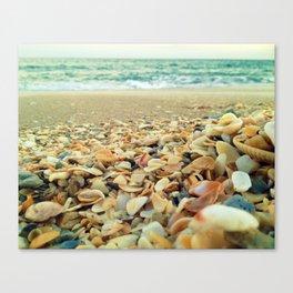 Shore and Shells Canvas Print