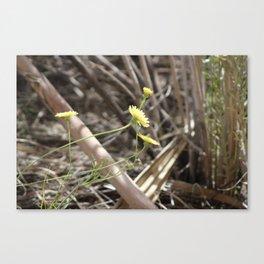 Wild Desert Dandelion and Worn Wood Coachella Valley Wildlife Preserve Canvas Print