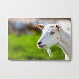 goats Metal Print