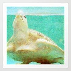 Portrait of a Sea Turtle Art Print
