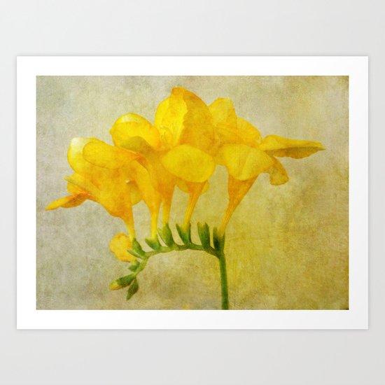 Vintage Yellow Freesia Art Print