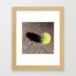 fallen horse chestnut Framed Art Print