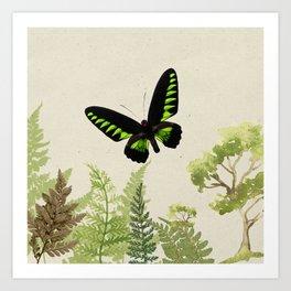 Ferns & Green Art Print