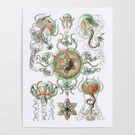 Ernst Haeckel - Trachomedusae (Jellyfish) Poster