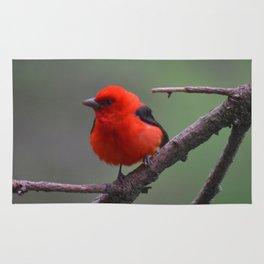 Scarlet Tanager - A Nature Art Print Rug