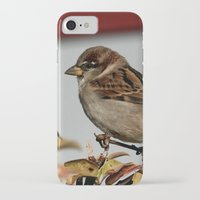 sparrow iPhone & iPod Cases featuring Sparrow by IowaShots