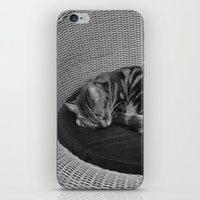 sofa iPhone & iPod Skins featuring sleeping cat on sofa by gzm_guvenc