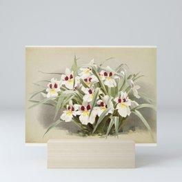 Odontoglossum roezlii from Reichenbachia Orchids (1888-1894) illustrated by Frederick Sander (1847-1 Mini Art Print