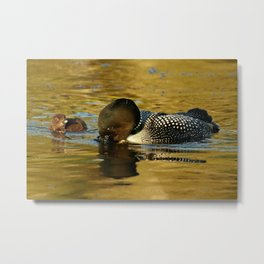 Mom fishing for her baby loon Metal Print