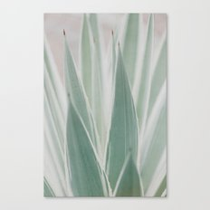 faded agave Canvas Print