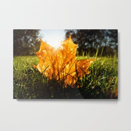 Maple tree leaf Metal Print