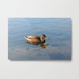 Duckies 1 Metal Print