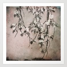 cherry tree branches Art Print