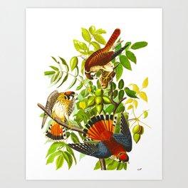 Sparrow Vintage Scientific Bird & Botanical Illustration Art Print