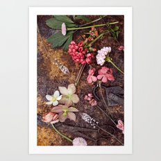 Pastel colored flowers Art Print