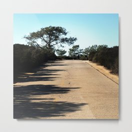Big Tree along Broken Hill Trail at Torrey Pines State Reserve Metal Print