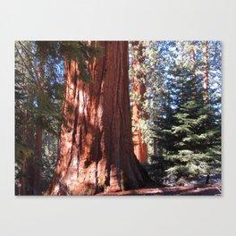 Giant Sequoia Canvas Print