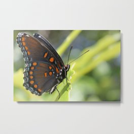 Close Up of Red Spotted Admiral Metal Print