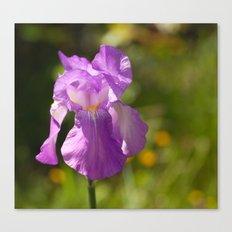 Iris 3109 Canvas Print